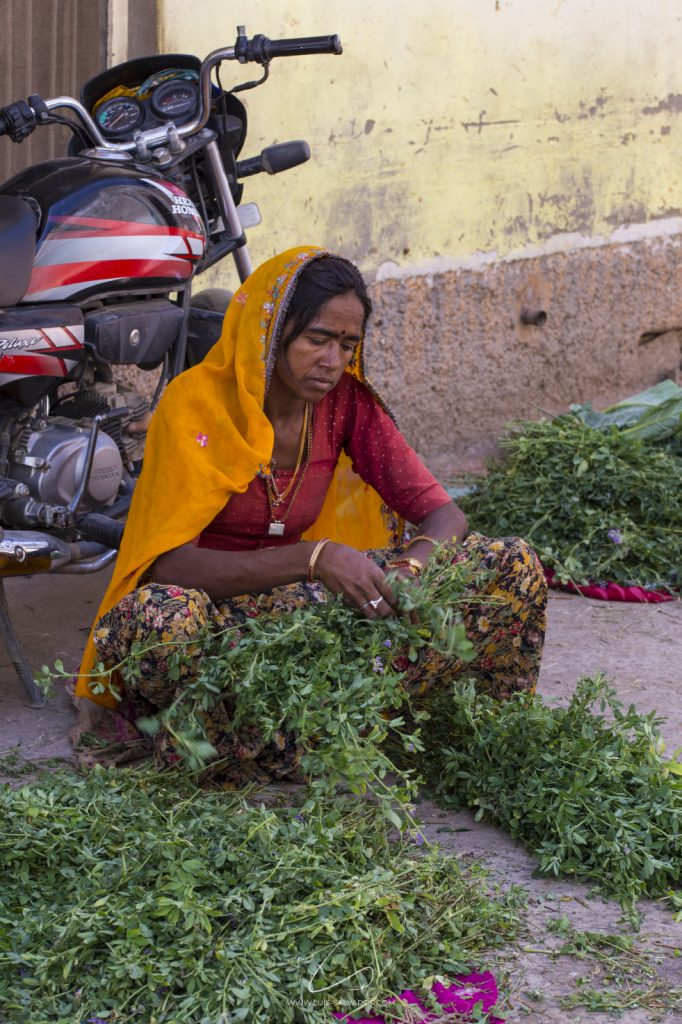 """Woman picking up herbs and vegetables"" - Pushkar, India. 2018 © Luís Salvador"