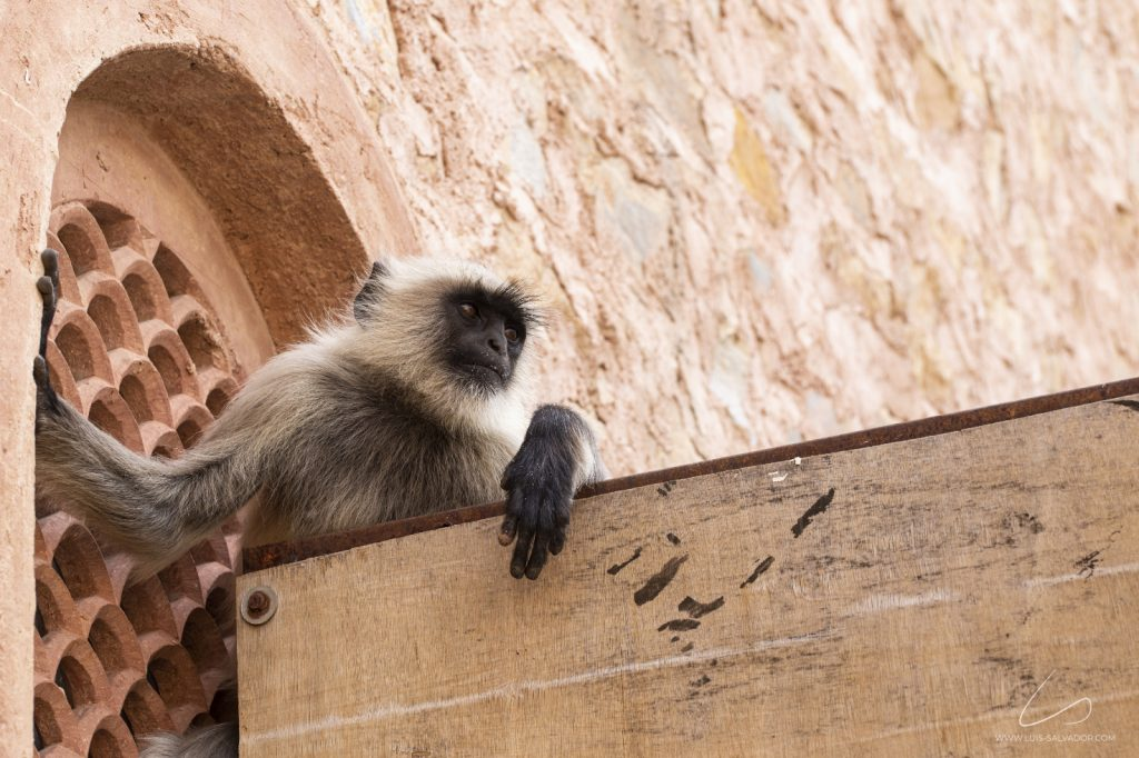 """So many tourist guides offering a tour to explore the Amber Fort in Jaipur but it's these fellas who know the place best."" 3/3 - Amber Fort, India. 2018 © Luís Salvador"